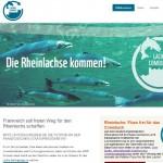 Rheinlachse